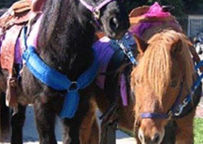 pony-ride02