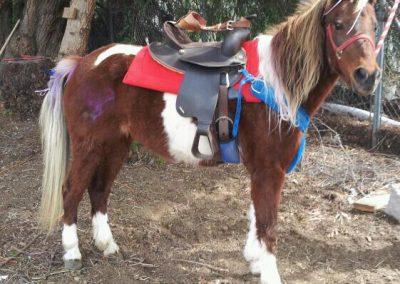 pony-ride04